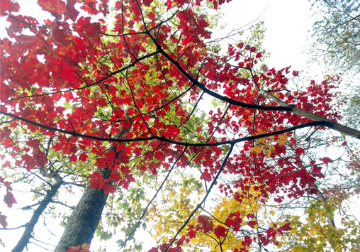 Fall Leaves on Lookout Mountain