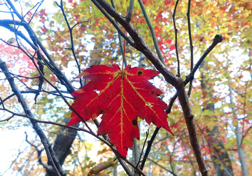 Maple Leaf Lookout Mountain